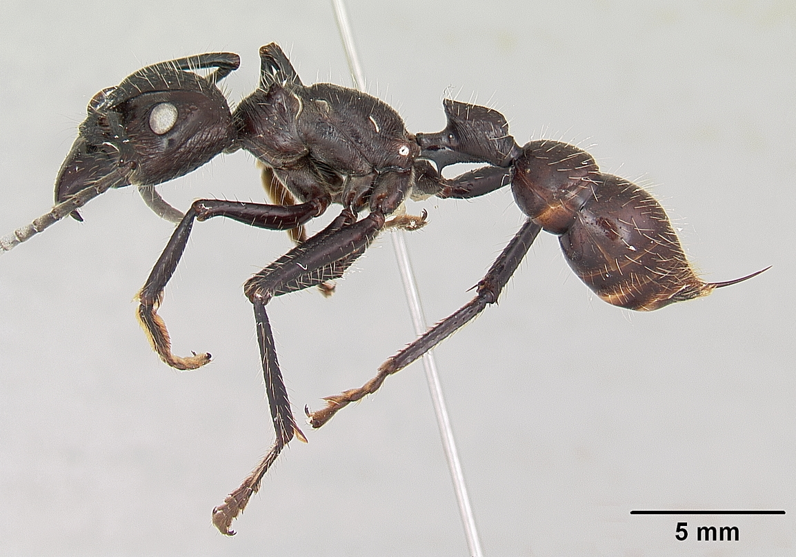 Flying Ants vs Termites Termite or Ant  Orkincom