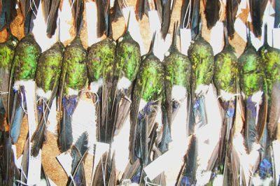 1210.birds.PastedGraphic-2.600